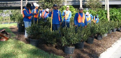 Maintenance and irrigation inc for Garden maintenance jobs